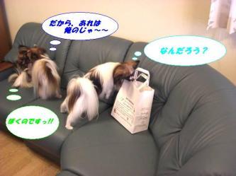 20-02_20080820180821.jpg
