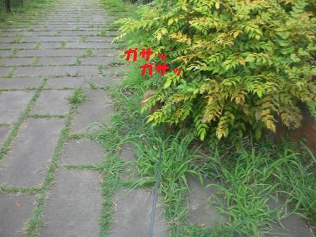 CIMG1329_20080816190540.jpg