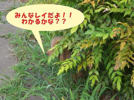 CIMG1330_20080816190545.jpg