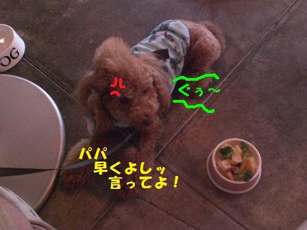 CIMG1348_20080816190652.jpg