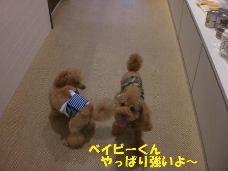 CIMG1367_20080816190837.jpg