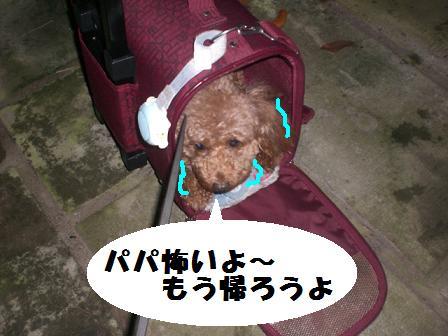 CIMG1378.jpg