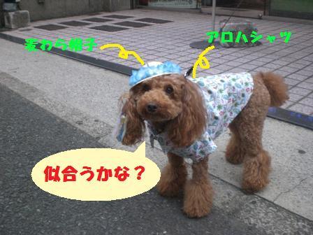 CIMG1470_20080818230816.jpg