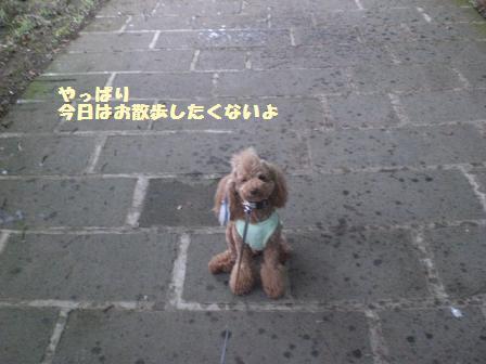 CIMG1508_20080819191401.jpg