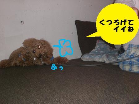 CIMG1569.jpg