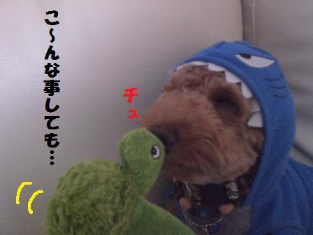 CIMG1634_20080821185353.jpg