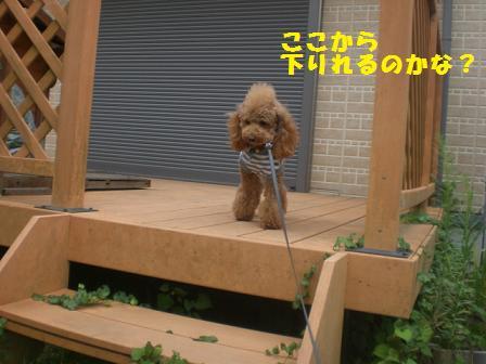 CIMG1720_20080823231111.jpg