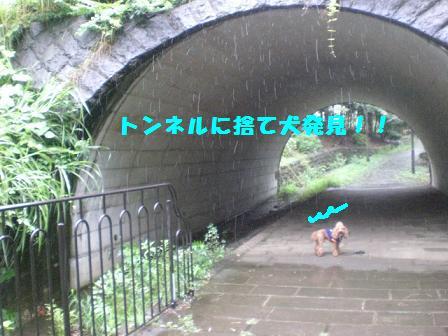CIMG1772_20080825232742.jpg
