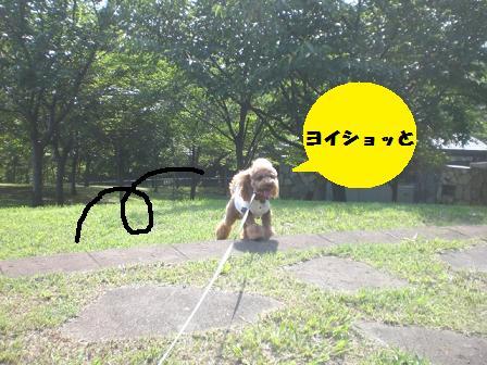 CIMG1851_20080829175026.jpg