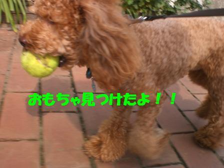 CIMG2366_20080913224221.jpg
