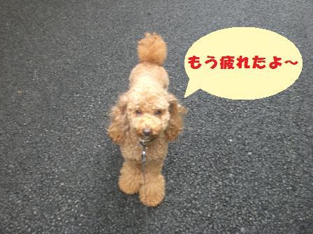 CIMG3094_20081001194050.jpg