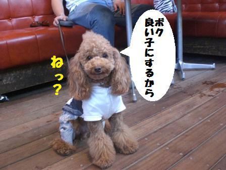 CIMG3179_20081002210244.jpg