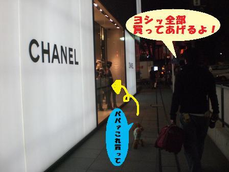 CIMG3413_20081009232133.jpg