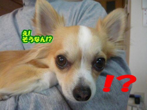 1_20081230110251.jpg