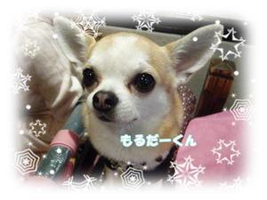 2008-12-15-03.jpg