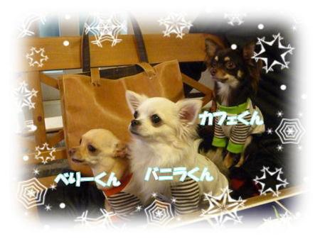 2008-12-15-16.jpg