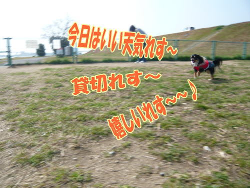 09-02ランを楽しむ花?1