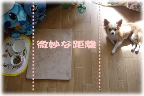 09-02Rayのごはん4