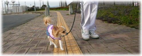 09-03  家族で散歩 1