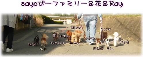 09-03 ドッグラン1