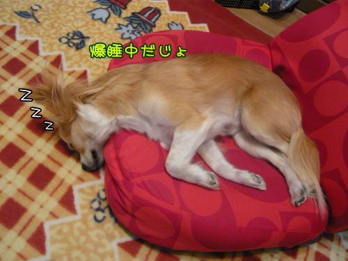 09-03 どんな寝方やネン