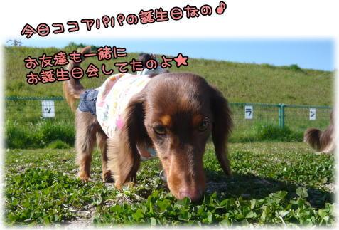 09-03 ドッグラン 1