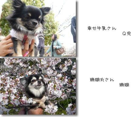 09-04 お花見? 6