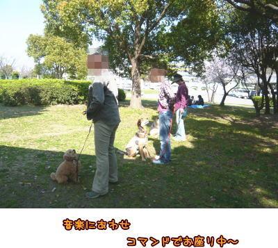 09-04 桜満開 10
