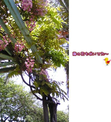 09-04 藤の花