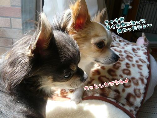 09-04 お見舞い 3
