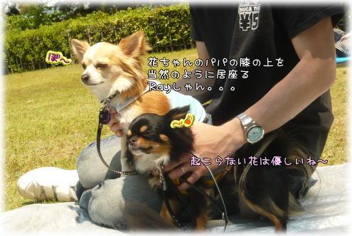 09-04 運動会 6