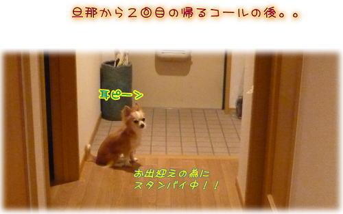 09-05 お帰り?♪