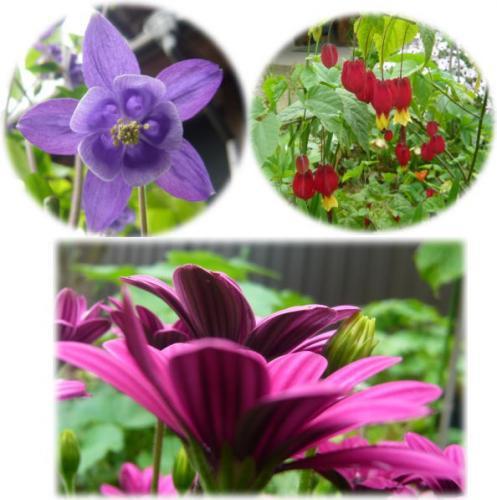 09-05 お庭 1