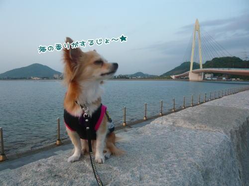 09-05 夕方の散歩 1