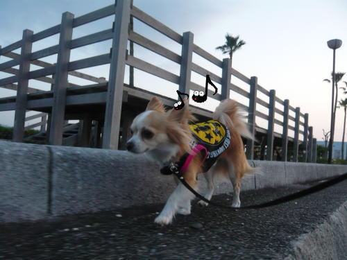 09-05 夕方の散歩 2