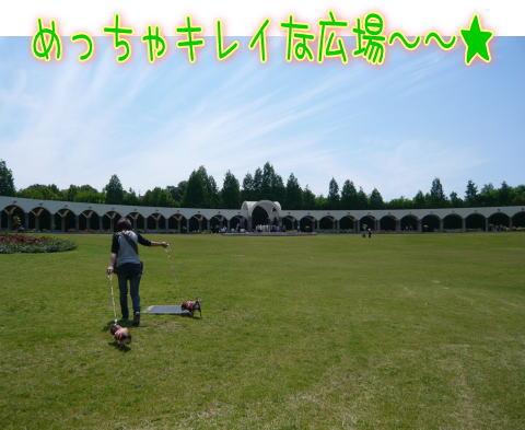 09-05 バラ園 2