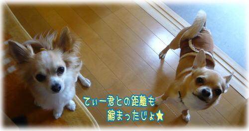 09-05 バラ三昧? 1