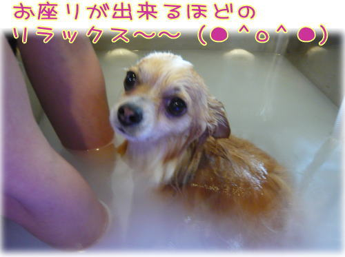 09-05 バラ三昧? 4