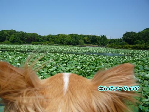 09-06 大泉緑地 1