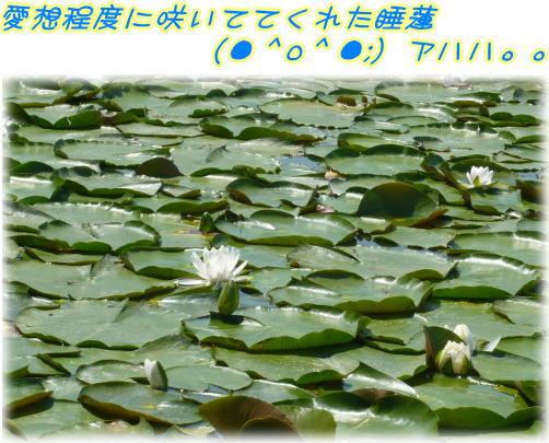 09-06 大泉緑地 2