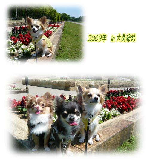 09-06 大泉緑地 3