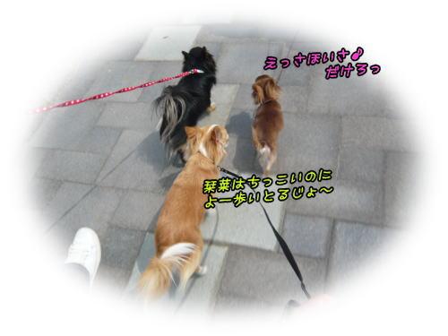 09-06 おっ散歩