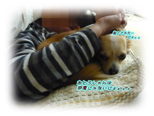 09-06 寝てる模様 1