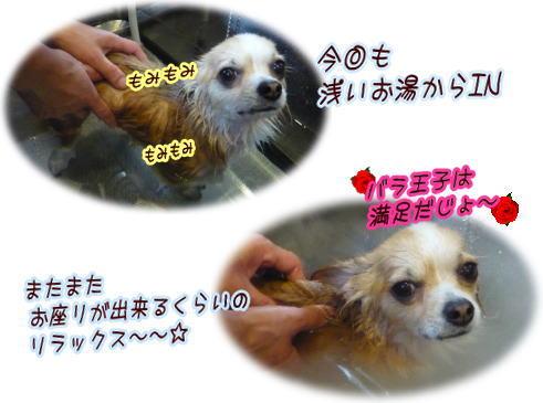 09-06 キレイきれい 2