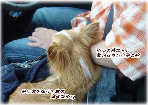 09-06 薄情なRay...