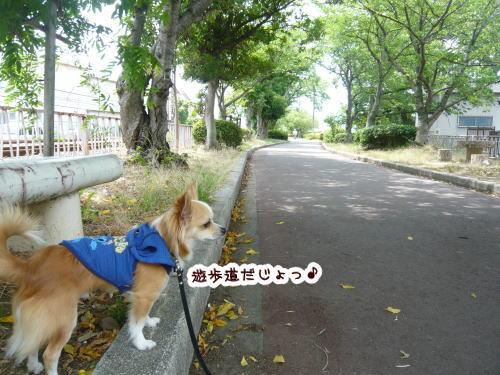 09-06 遊歩道