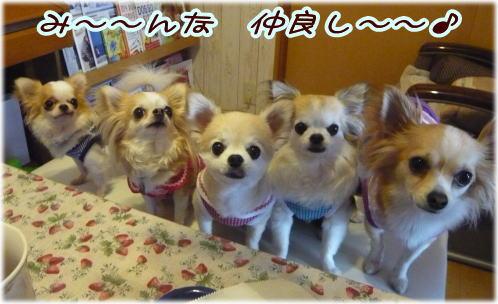 09-06 ワンコのお菓子 13