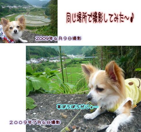 09-07 棚田♪