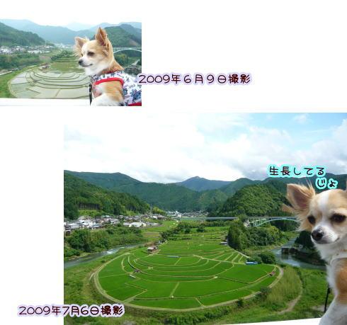 09-07 棚田♪ 1