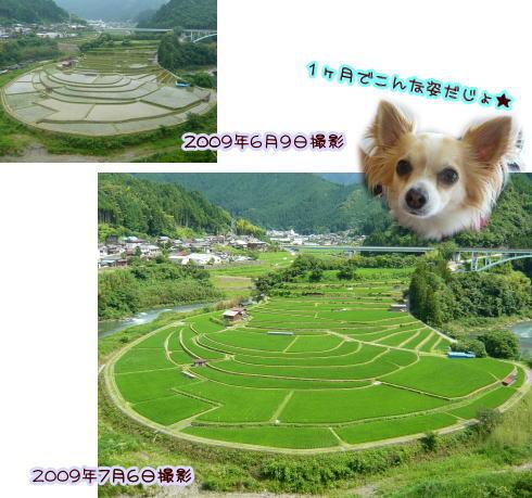 09-07 棚田♪ 2